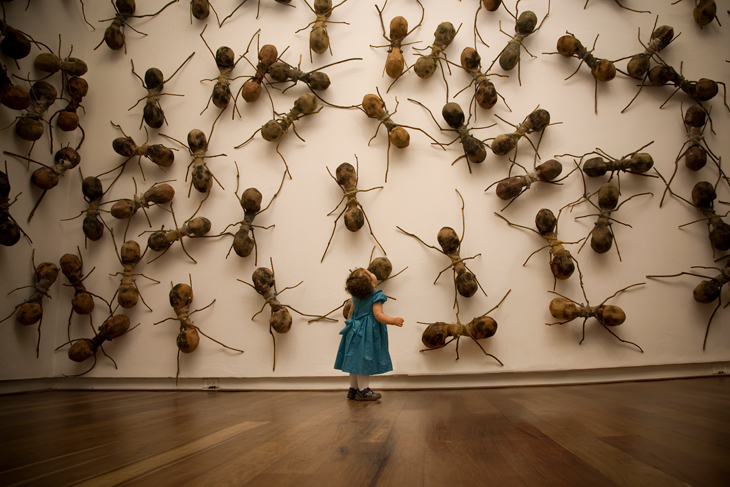 Ant Installation